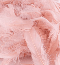 Rose Gold feathers