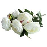 Cream Peony Rose Flower Bush