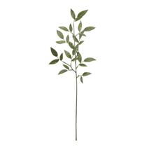 Ruscus Spray Leaves 74cm