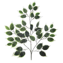 Variagated Green Ficus Branch Leaves 50cm