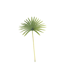Real Touch Green Palm Fan 50cm
